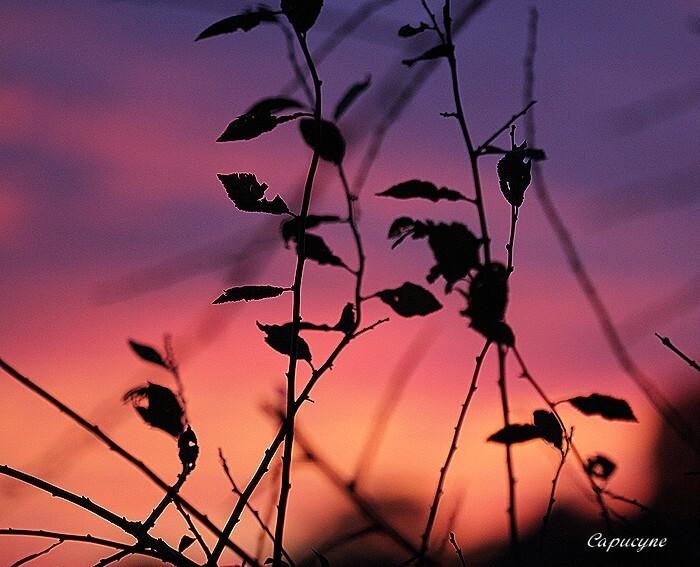 28 11 2013 coucher de soleil (6)