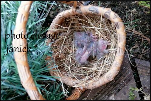 sortie de nid