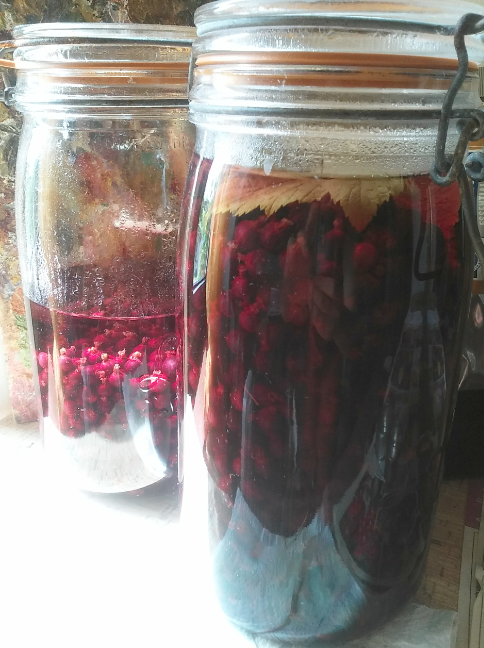 Liqueur de cassis en préparation !/ Preparing blackcurrant liquor !