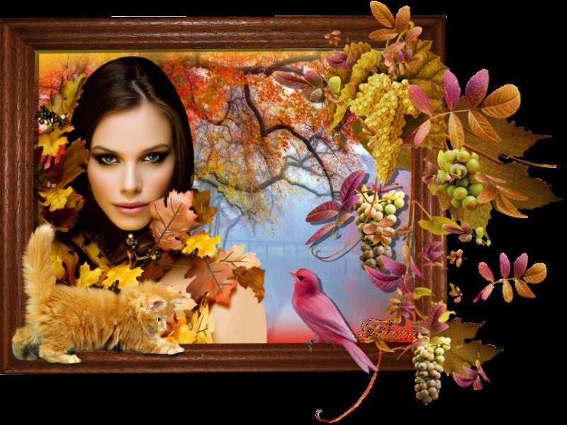 Défi automne octobre 2015