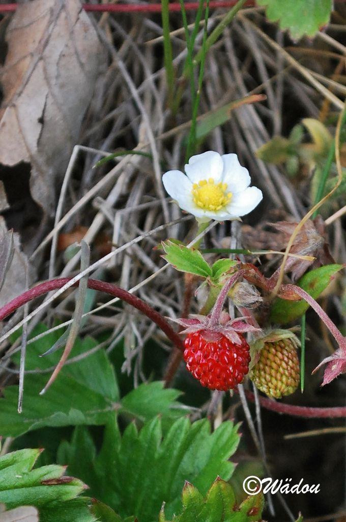 En fleur et en fruit