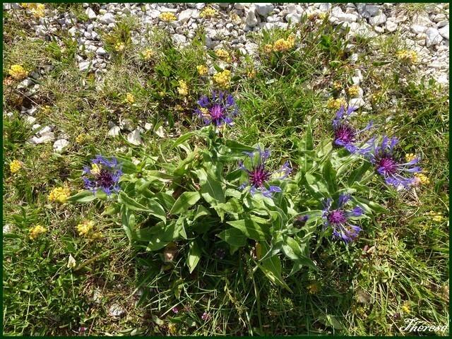 Flore du Grand Colombier (19)