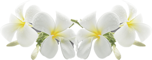 Exotic Flowers (34).png