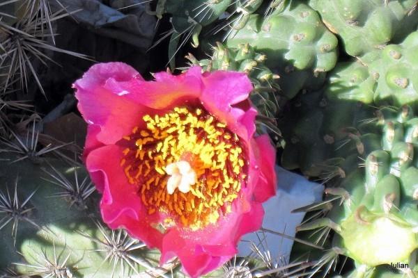 w002 - Fleur