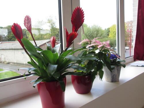 Les plantes de la classe