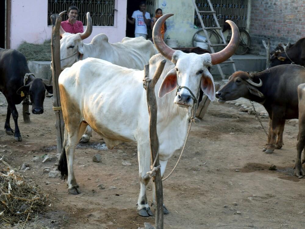 Jambughoda - Gujarat - Inde