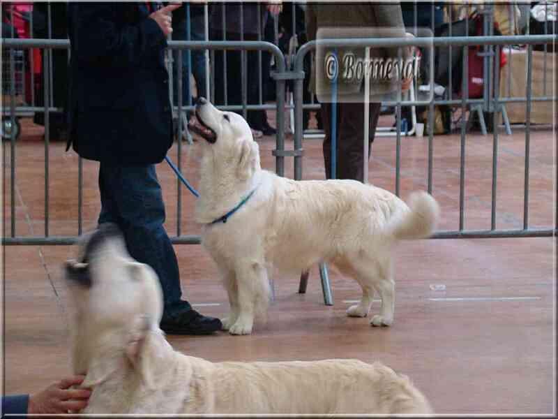 Exposition canine Castres CACIB, 21 novembre 2010