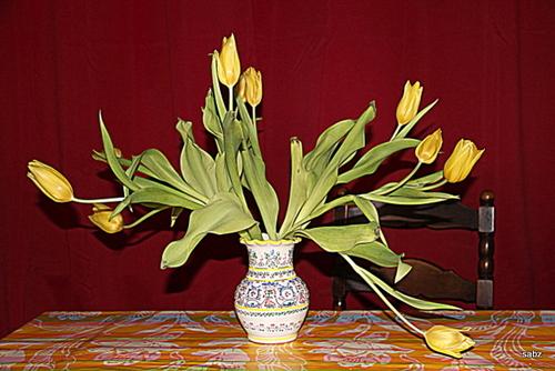 tulipes fin de semaine