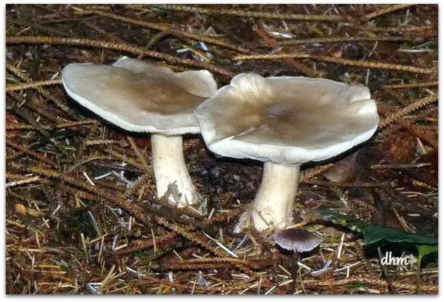 Saison des champignons