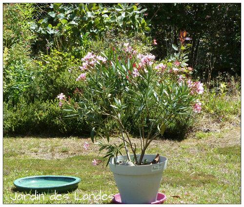 le jardin en Aout.