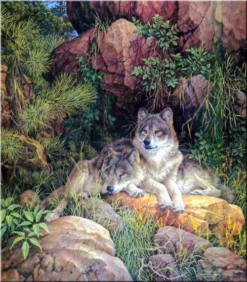 Loup 02