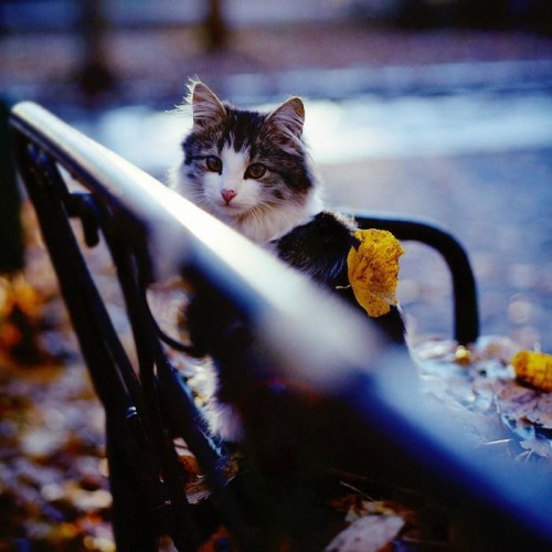 chat-d-automne-7.jpg