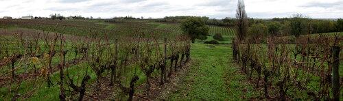 De retour dans les vignes