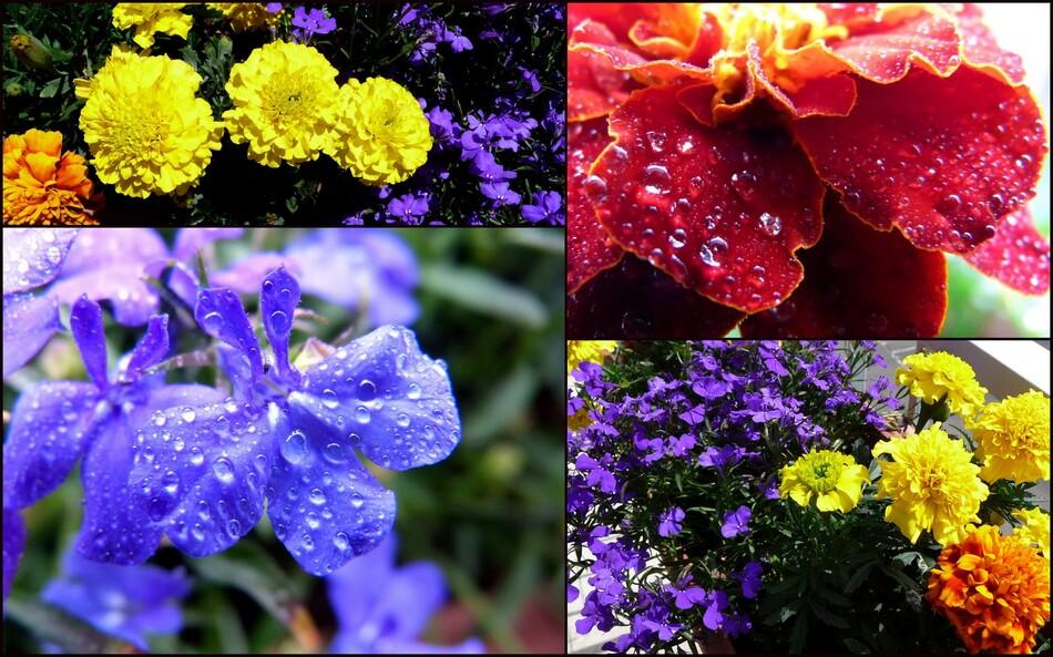 Images de juin