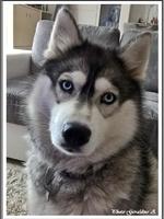 Louska (plus de 2 ans)