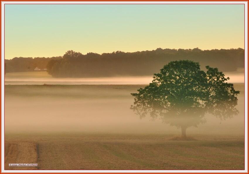 Première brume matinale