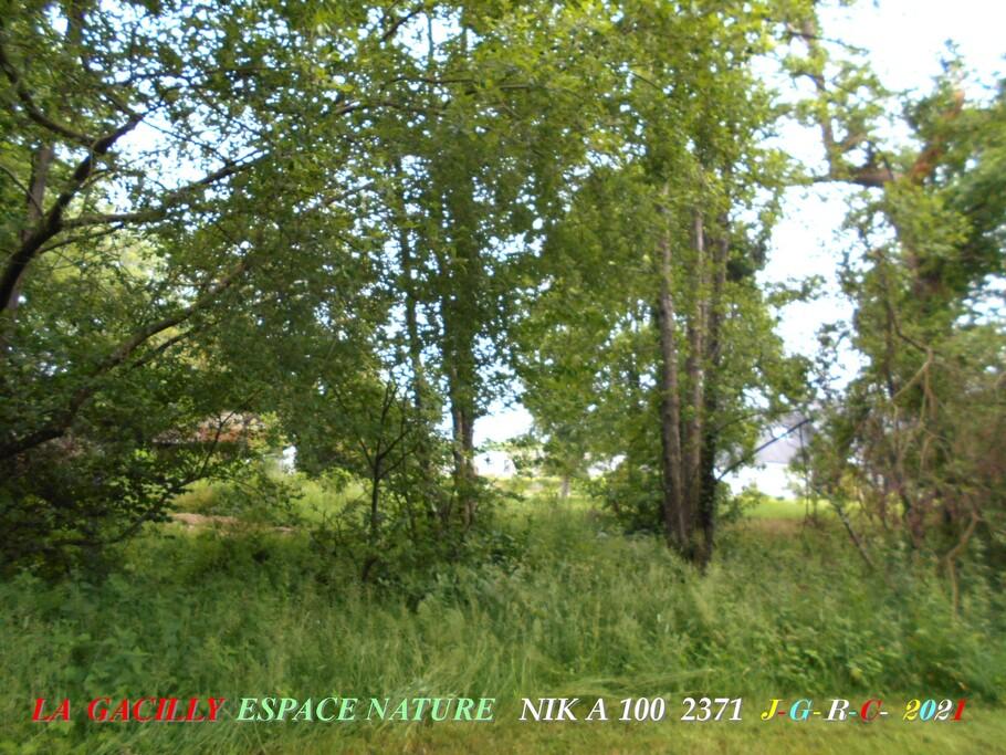 ESPACE NATURE:  D  28-06-2021    4/6  chemin du ru des Brelles LA GACILLY