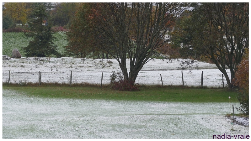 """Première neige. (""""24 heures photo"""" Défi géré par Patricia)"""