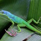 De belles couleurs ! - Photo : Edgar