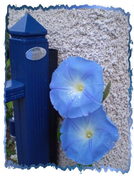 encadrement bleu