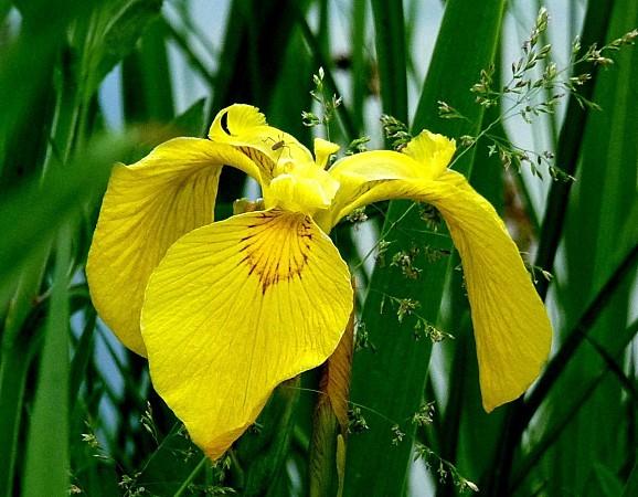 fleurs1.06-075.JPG