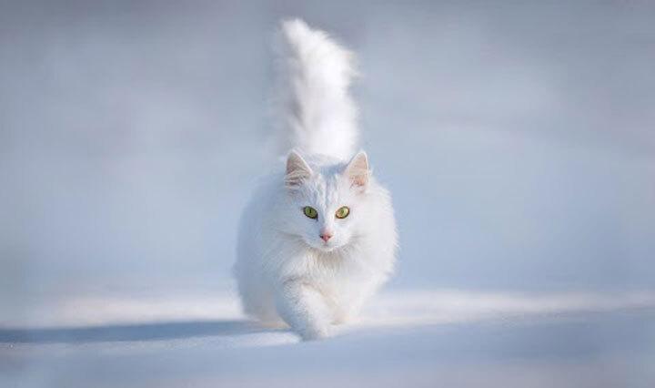 xx-animaux-dont-la-beaute-est-sublimee-par-les-couleurs-hivernales3