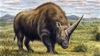 Les licornes de la préhistoire