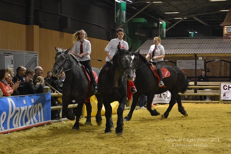 Salon de l'Agriculture 2014 : Le Cob Normand