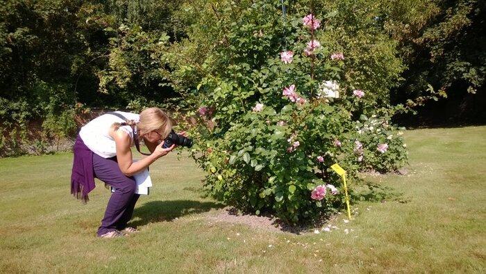 Concours international de roses nouvelles - Ville du Roeulx - 2013 (2/6)