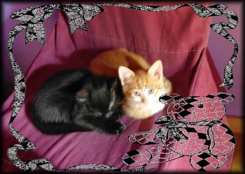 Toilette des petits chatons en vidéo
