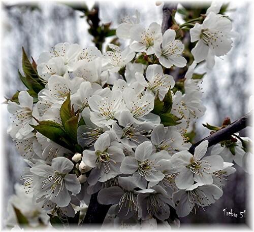 Juste pour vous souhaiter un bon premier mai.....