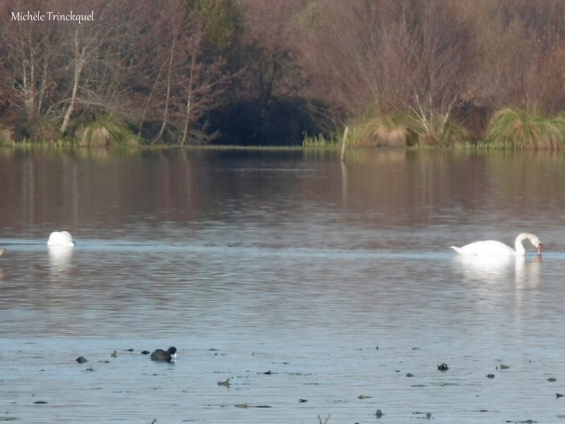 """Une balade au bord de """"mon"""" Lac, le 5 décembre...."""