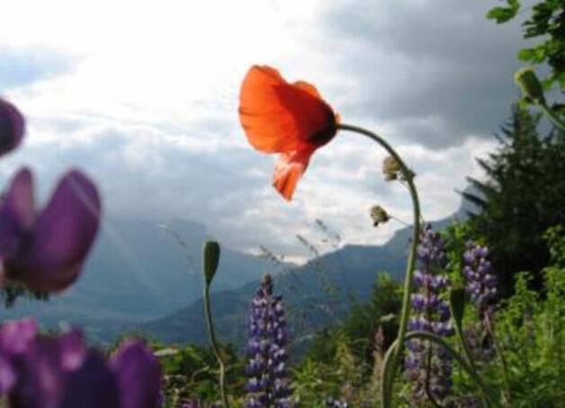 fleurss jpg