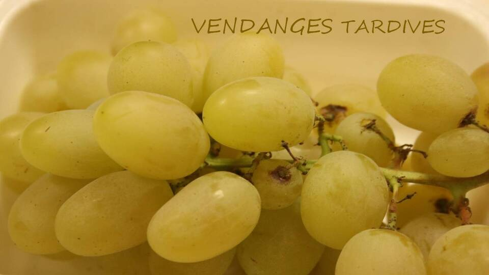 Vendanges tardives (2)