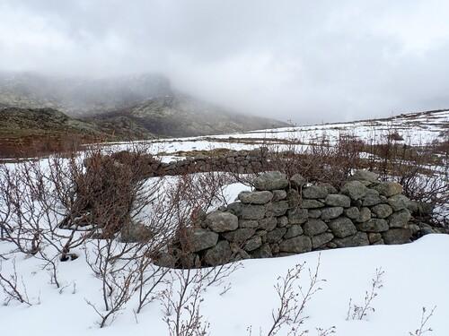 Nino sous la neige