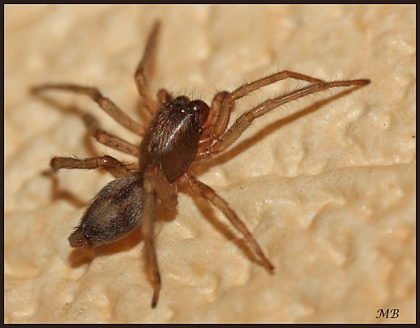 Arachnides-02-8233.jpg