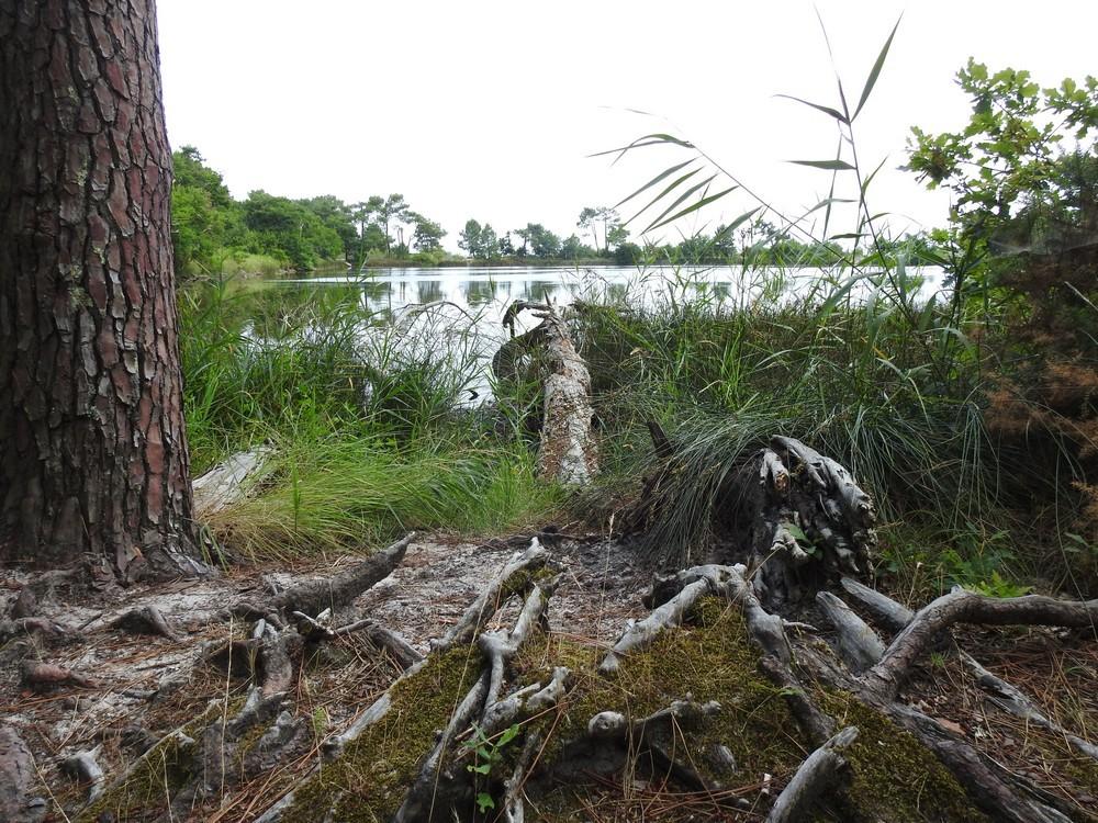 Balade dans la forêt de Saint-Brice...