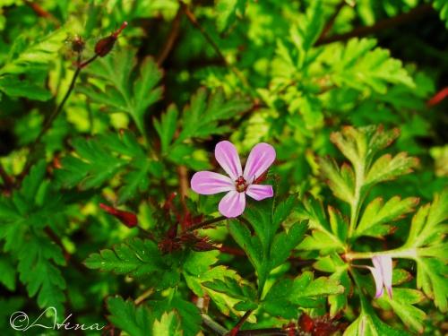 Fleurs et feuille d'Arbres