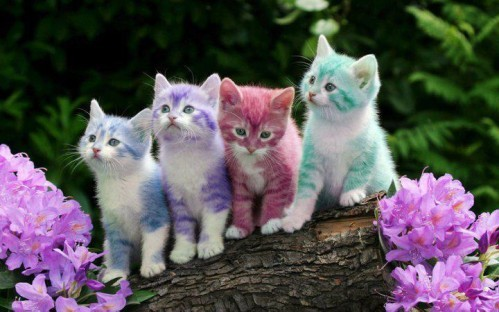 chatons paque