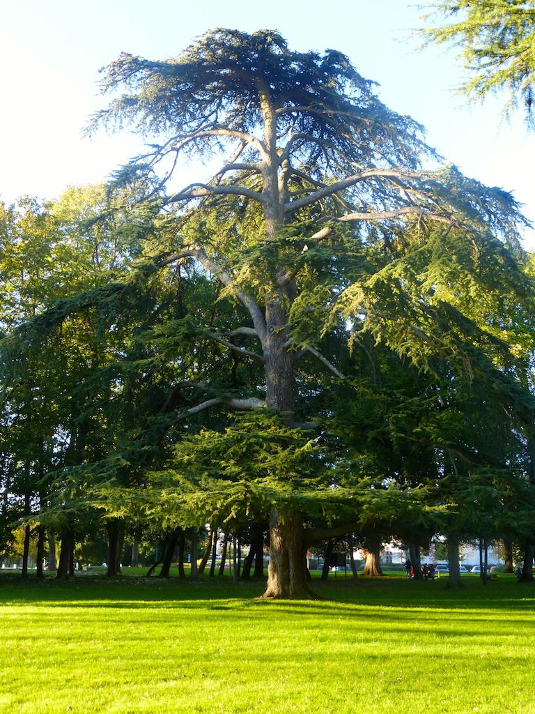 Parc de la Perraudière.