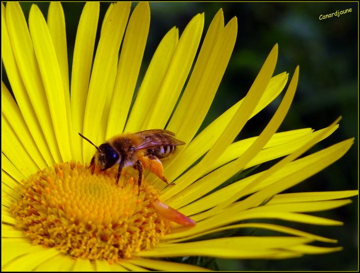 Biodiversité et biomasse, nos vies y sont liées.