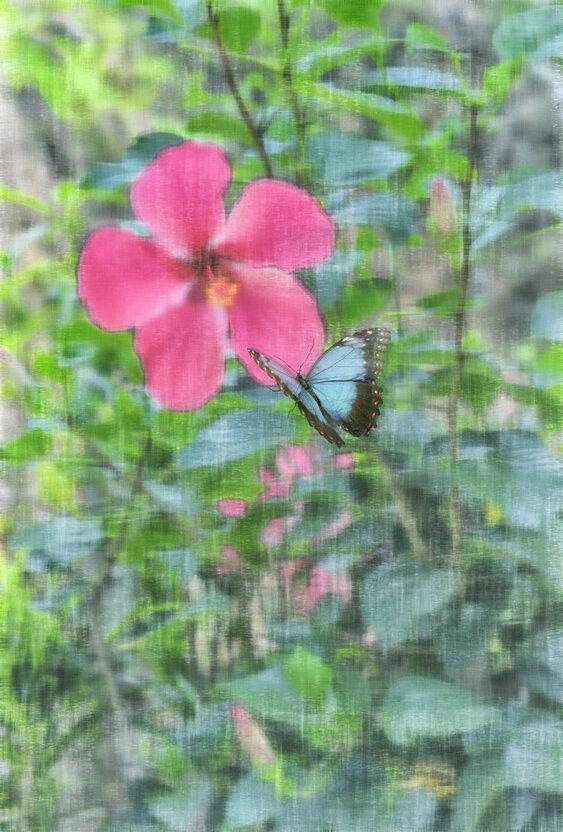 jennystokes - Papillon Bleu