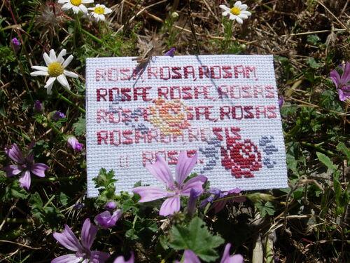 Les roses d'Elisabeth