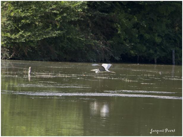 - Grosse parade des habitants de l'étang Morel