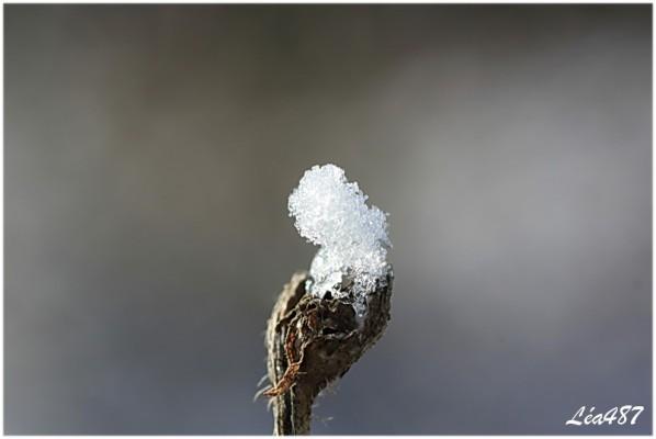 Nature-2-9845-neige-sur-fleur-seche.jpg