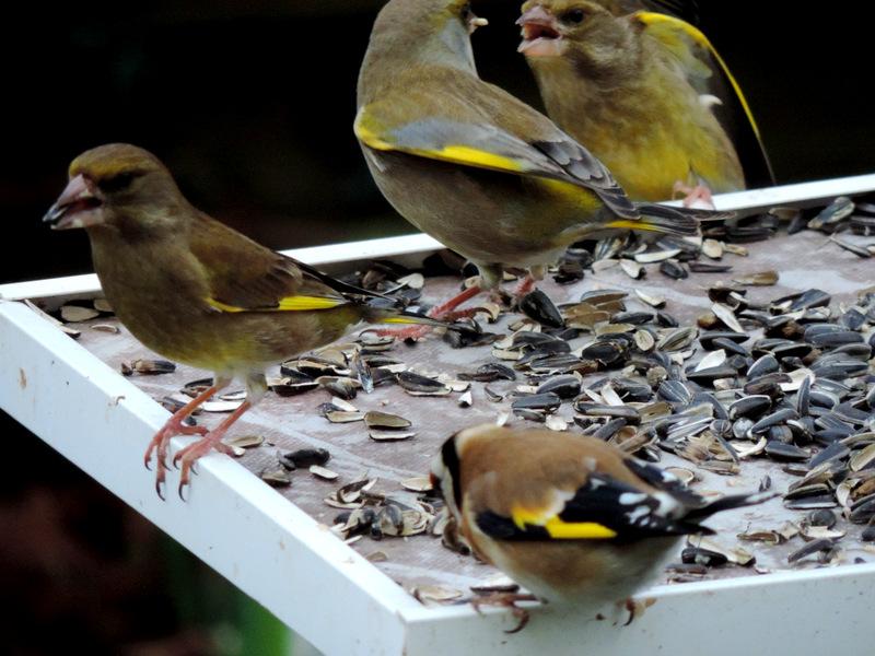 Nouvelles du Rest'oiseaux