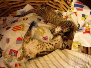 chatons-LINDA-et-TITEUF.jpg