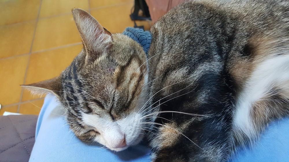 Mon chat porte un col roulé !