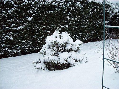 dans mon jardin le 4 janvier