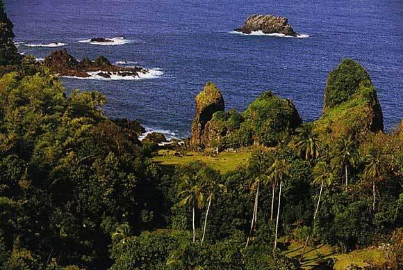Forêt pluviale de Java